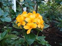 Kew flower 2