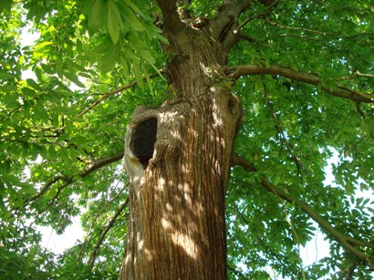 そして巨木ばかりです